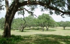 chicolete-ranch-main-4
