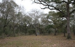texas ranch for sale