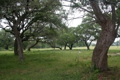 Fayette County TX 72 acres for sale