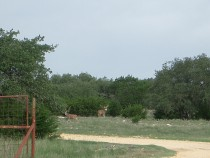 Kerr County Ranch for Sale