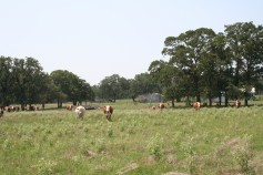 Caldwell County Ranch for Sale