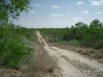 South Texas Jim Wells County Hunting Ranch for Sale