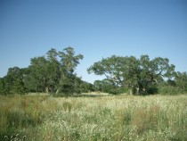 Jackson County TX Ranch for Sale