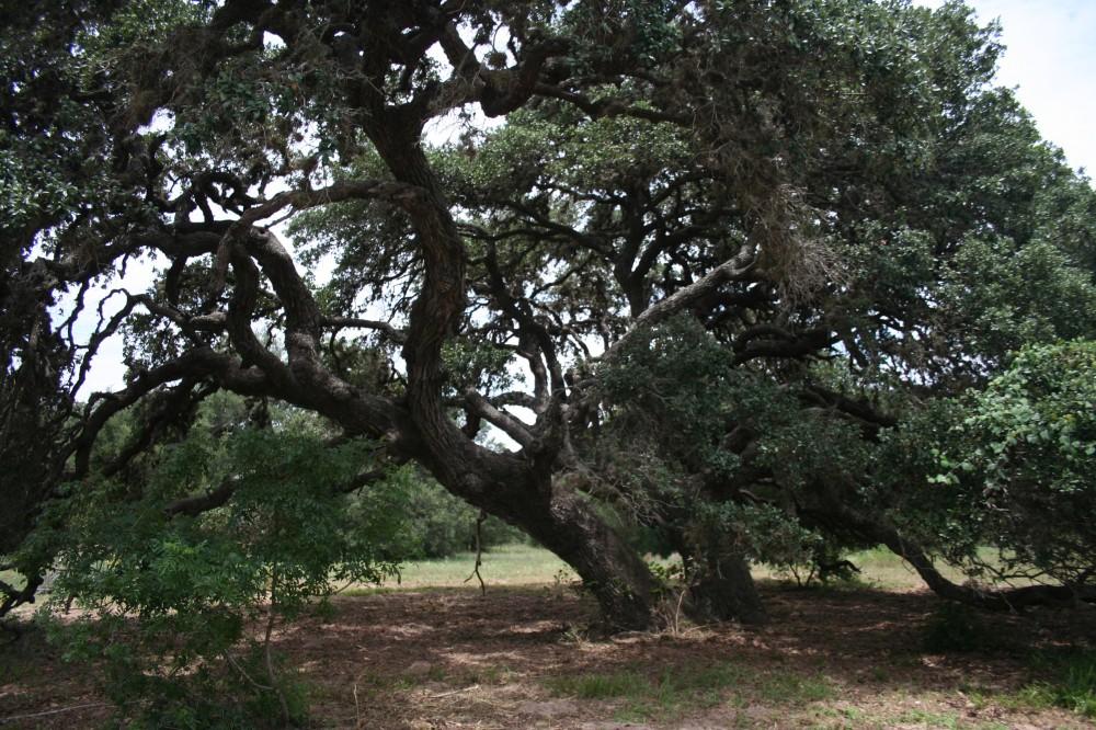 Cuero Texas Ranch for sale