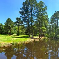 Piney Hill Ranch-New Ulm, TX For Sale