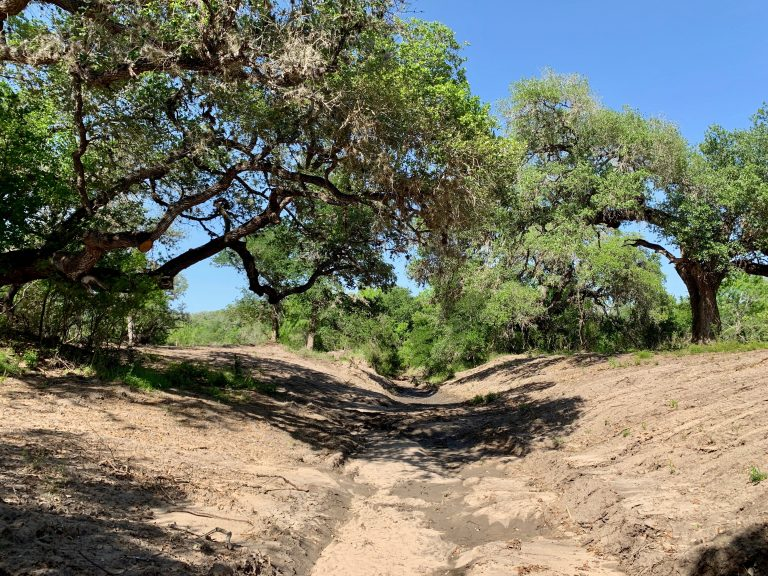Salt Branch Creek Ranch